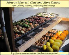 How to Harvest, Cure and Store Onions: You can enjoy home grown onions for months after the growing season has finished with just a little extra time and effort. In this post we'll cover onion harvest, curing onions, and several different onion storage methods.