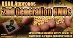 USDA Approves 2nd Generation GMOs
