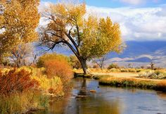 Fall at the River by Marilyn Diaz