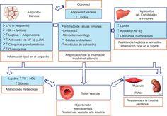 Papel del tejido adiposo blanco en las complicaciones vasculares asociadas a la…