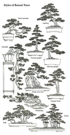 Infographic on different Bonsai forms #JapaneseDesign