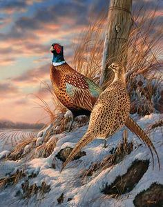 pheasants-in-winter-art-twilight-escapade-by-rosemary-millette-1593748019.jpg (350×445)