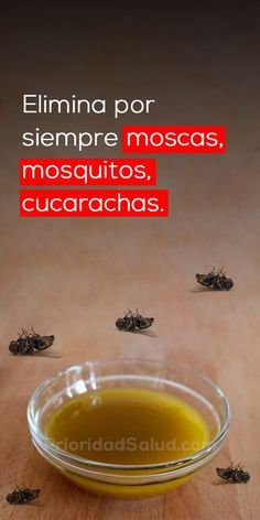 Elimina las moscas, los mosquitos y las cucarachas por siempre con este truco casero Diy Cleaners, Household Cleaners, Cleaning Solutions, Cleaning Hacks, Christmas Food Treats, Diy Christmas, Home Hacks, Clean House, Good To Know