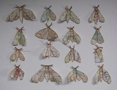 map moths by Jenny Mccab
