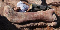 2016年1月15日、ニューヨーク・マンハッタンにあるアメリカ自然史博物館で、近年発見された恐竜の化石の中でも最も巨大なものを基に作成された、全長約37メートルもある世界最大級の恐竜の全身骨格が公