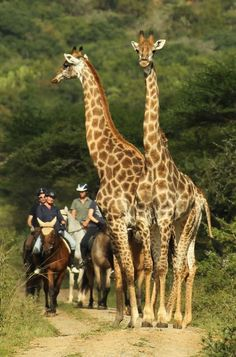 Pakamisa Lodge, down-to-earth luxury and seclusion in stunning Zululand wilderness KwaZulu Natal, South Africa. Clay Pigeon Shooting, Hills And Valleys, Spanish Architecture, Private Games, Kwazulu Natal, Wildlife Park, Big 5, Game Reserve, Delicious Meals