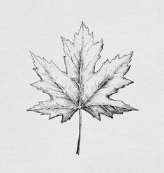 Leaf Drawing, Plant Drawing, Maple Seed Tattoo, Pencil Art, Pencil Drawings, Leaves Sketch, Art Sketches, Miniatures, Creative