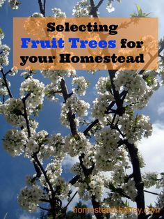 An overview of how to select fruit trees for your homestead orchard, and some important considerations for selecting fruit trees. Homestead Farm, Homestead Gardens, Farm Gardens, Outdoor Gardens, Fruit Garden, Garden Trees, Edible Garden, Trees And Shrubs, Flowering Trees