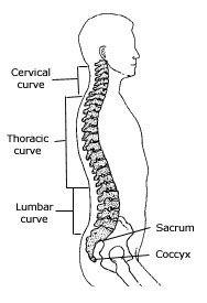 / Improve Your Posture