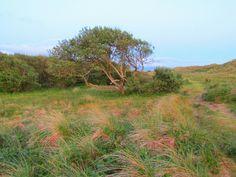 Sand dunes Dyffryn Gwynedd Wales from Sarah Kay