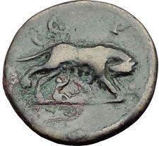 COMMODUS 188AD Parium Parion Mysia Authentic Ancient Roman Coin WOLF i65130