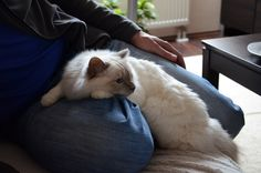 My lovely cat!