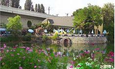 ▸ Die schönsten Lokale am Wasser in Wien Stuff To Do, Things To Do, Vienna Austria, Holiday Travel, Dolores Park, Plants, Holidays, Board, Pictures