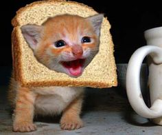 So, um, what exactly is cat breading? Click on to find out...