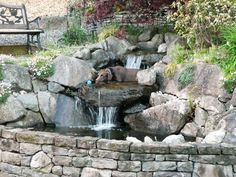 This attractive pond is housed inside a retaining wall on a sloped backyard. From all appearances, the family dog thinks the first waterfall level is the perfect spot to cool off. Posted by pam25Share This Photo Gallery Facebook Twitter Link to this Photo Gallery: