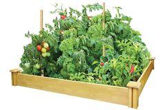 Greenes Cedar Raised Garden Bed $29.99 (acehardware.com)