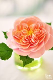 Brilliant David Austen sugar rose <3 Pretty sugar flower (DK Designs).