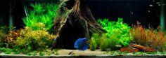 10 - Tropica Aquarium Plants