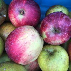 The last of apple harvest 2016! #garden #gardening #homegrown #apples #appletree #westcoastliving