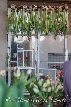 Byt julgardiner mot vårgardiner   En idé av Anna Gouteva på årets tulpanpressvisning anordnad av Blomsterfrämjandet.