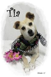 Tia is an adoptable Chihuahua Dog in Emporia, KS. Found on S Market If interested in adopting a pet you will need to fill out a request to adopt. This needs to be on file overnight before you are able... ADOPTED