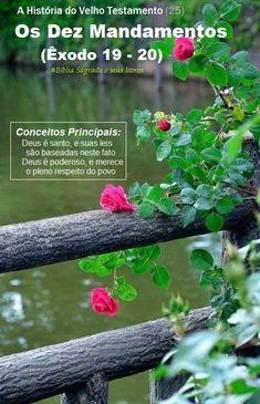 Ana Rosa by vicsax Splash Photography, Color Photography, Color Splash, Color Pop, Beautiful Flowers, Beautiful Pictures, Nice Flower, Rosa Rose, Photo D Art