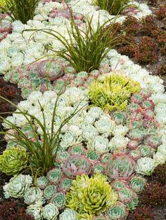 Designing a Garden With Foliage: Outdoors: Home & Garden Television -- Colorful Succulents: A composition of various sedums creates the foundation of an eye-catching, multi-seasonal bed. River of Hens and Chicks . Succulent Landscaping, Succulent Gardening, Cacti And Succulents, Planting Succulents, Garden Plants, Container Gardening, Garden Landscaping, Planting Flowers, Landscaping Ideas