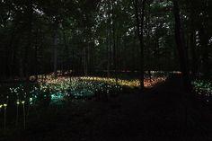 Forest of Light at Longwood Gardens  #lightatlongwood
