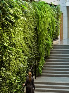plantwall/vertical garden in lawyer's office, Stockholm, Sweden can find Lawyers and more on our website.plantwall/vertical garden in la. Verticle Garden Wall, Vertical Green Wall, Vertical Garden Design, Green Architecture, Landscape Architecture, Sustainable Architecture, Jardin Vertical Artificial, Vertikal Garden, Green Facade