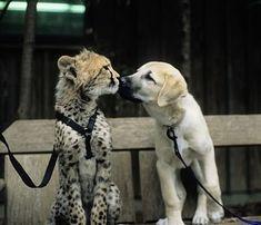 Des animaux qui posent comme les meilleurs amis du monde