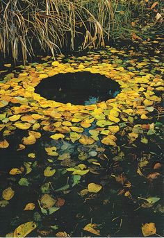 Yellow leaf circle