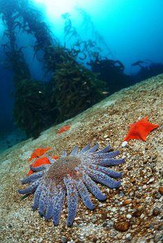Starfish Variatials by V Taitano on Flickr.