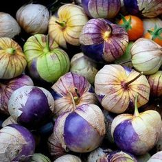 100 Seeds Purple Tomatillo-Physalis ixocarpa- Beautiful purple fruit FREE SHIPPING by Seeds and Things