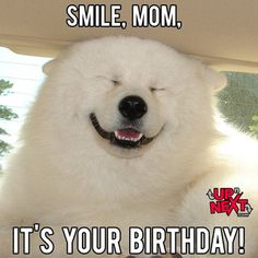 The simple act of sending funny happy birthday mom memes can bring a smile to a mother's face. Here are 101 happy birthday memes to help you get started. Happy Birthday Mom Meme, Happy Birthday In Heaven, Singing Happy Birthday, Happy Birthday Images, Funny Birthday Cards, Mom Birthday, Birthday Wishes, Birthday Memes, Birthday Humorous