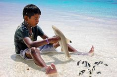 A Kid with a baby shark, He tried to Observe it, Well I'm also really familiar in TV with big sharks, But this time he try with small. By the way it's good for his size.