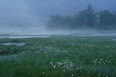 #nature #landscape #japan