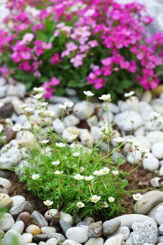 pflanzen fur steingarten sollten vorsichtig gewählt werden