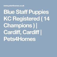Blue Staff Puppies KC Registered ( 14 Champions ) | Cardiff, Cardiff | Pets4Homes