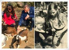 Ich war schon als Kind ganz wild auf die Ziegen im Streichelzoo. Links ein Foto von heute - rechts hummelellli vor ca. 36 Jahren :) #stralsund #tierpark #streichelzoo