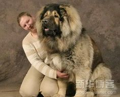 O my goodness ..... I would have to take out a loan to feed this DOG .  I kind is it ?