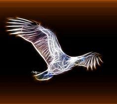 Moving+Fractal+Art | Fractal Eagle by RHuggs