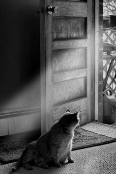 This reminds me of my cat, Christopher...He always waited by the door when I was on my way home from school!