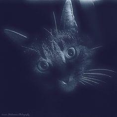 Glow Effect, Filters, Kitty, Instagram Posts, Fun, Animals, Animais, Animales, Animaux