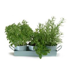 Herb Tray On Pinterest