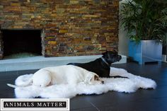 Animals Matter® Orthopedic Faux Fur Shag Rug.