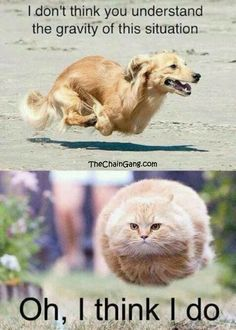 #humor #fun #meme #animals #cats #dogs #funny