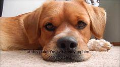 Cutest dog gets annoyed!