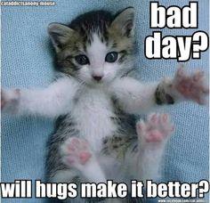 18+ Adorable Kitties Who Love A Hug #cats #kitty #memes #catlover