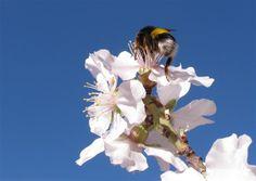 Almendros en flor | Greenpeace España