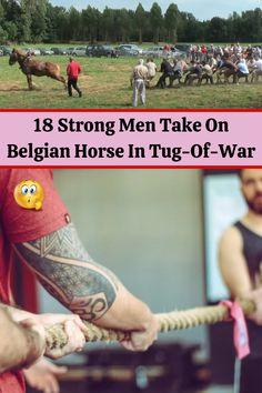 Belgian Horse, Pretty Prom Dresses, Bridal Dresses, Tug Of War, Chic Nails, Draft Horses, Destin Beach, Colorful Eyeshadow, Smokey Eye Makeup